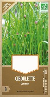 Graines de ciboulette commune